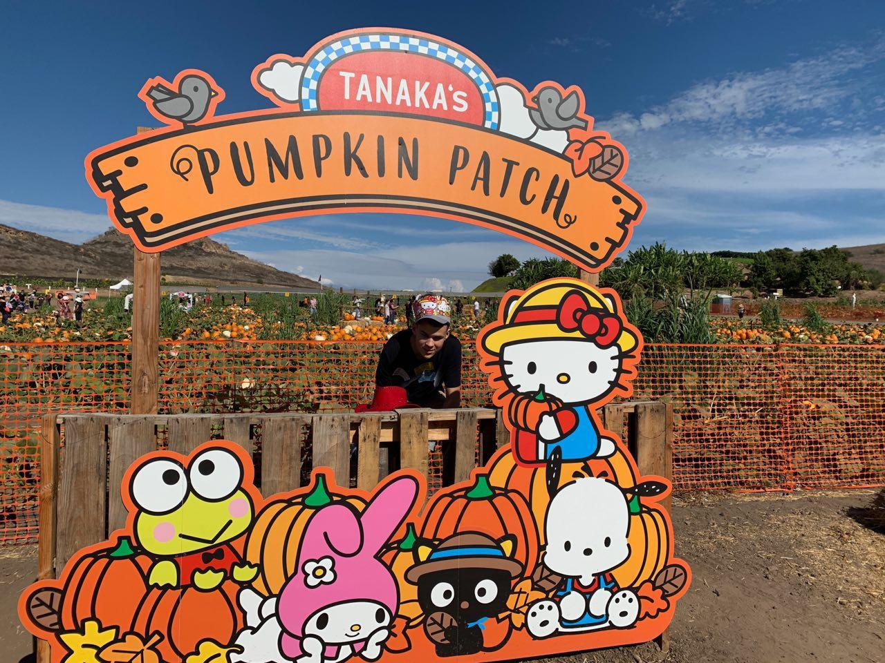 Tanaka's Pumpkin Patch